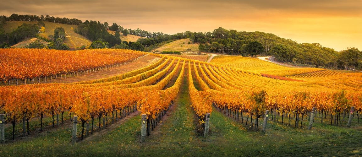 Gorgeous,Vineyard,In,The,Adelaide,Hills